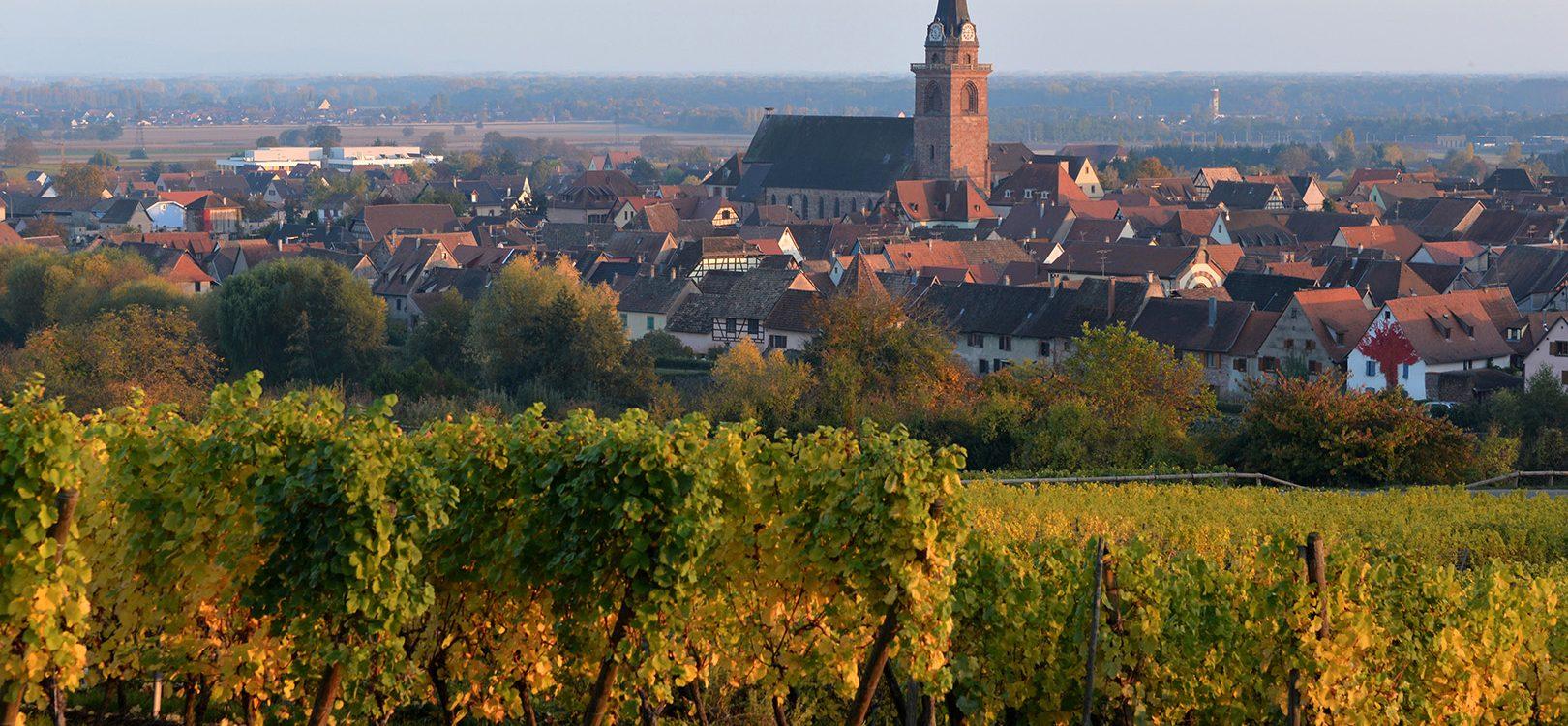 Vue de Bergheim